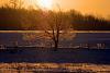 Flaming Snow Tree