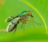 robberfly and six legged fly