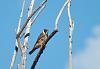 Birds of the Lake (many photos)