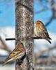 A few winter birds