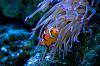fishies + seahorses