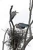 Love birds nesting