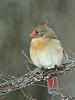 """Almost"" Birdie"
