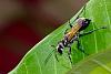 Skittish Black Wasp