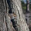 Squirrel Test focus