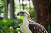 Davao Bird Farm