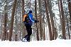 BC Skiing Series