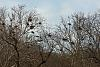 Great Blue Heron Rookery!