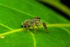 jumping spider and six legged fly