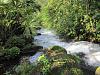 Rain Forest River