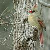One Birdie