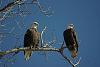 a pair of Eagels