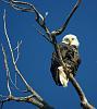 Alton Eagle,I see you!!