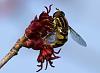 Buds & Bee (4 pics)