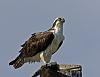 Osprey's sashimi lunch