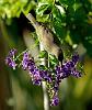 Nectar Trove