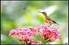 A few sunbirds