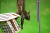 Raiding the feeder