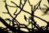 Sillouette of a Hummingbird