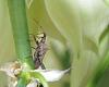 Hiding in my Yucca plant