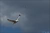 Seagulls in Flight (Jupiter-9)