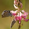 Butterflies (9 pics)