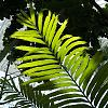 Moody Gardens Rainforest Pyramid - Plants and Flowers [6 IMG]