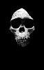 Ape skull - museum artifact