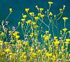 Wildflowers in Greece