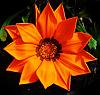 Deep Orange Gazania