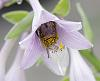 the pollenator...