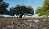 Mangrove Port hedland