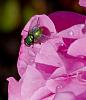 Green on Pink