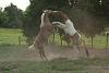 Horse Play!!!
