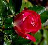 A Slendid Blended............