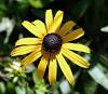 a few summer blooms....