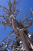"Weekly Challenge #172 - ""Tree Study"" WINNERS"