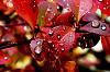 Autumn Rains