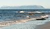 Dead Sperm Whale on beach