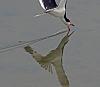Skimmer skimming..