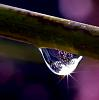 Peach Tree in a Drop!