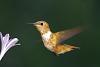 Sunny hummingbird