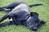 Our Dog Oreo!!