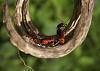 Red Beetles Being Naughty