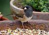 Little bird in my backyard