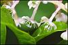 A Few Plant Closeups