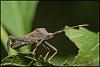 Prehistoric Looking Bug