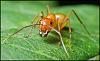 Love Them Ants!
