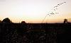 An evening among El Dorado Hills [1 img]