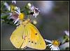 (5 Species) Butterfly Day